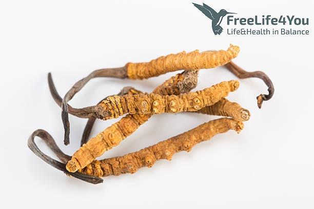 Cordyceps - Freelife4you